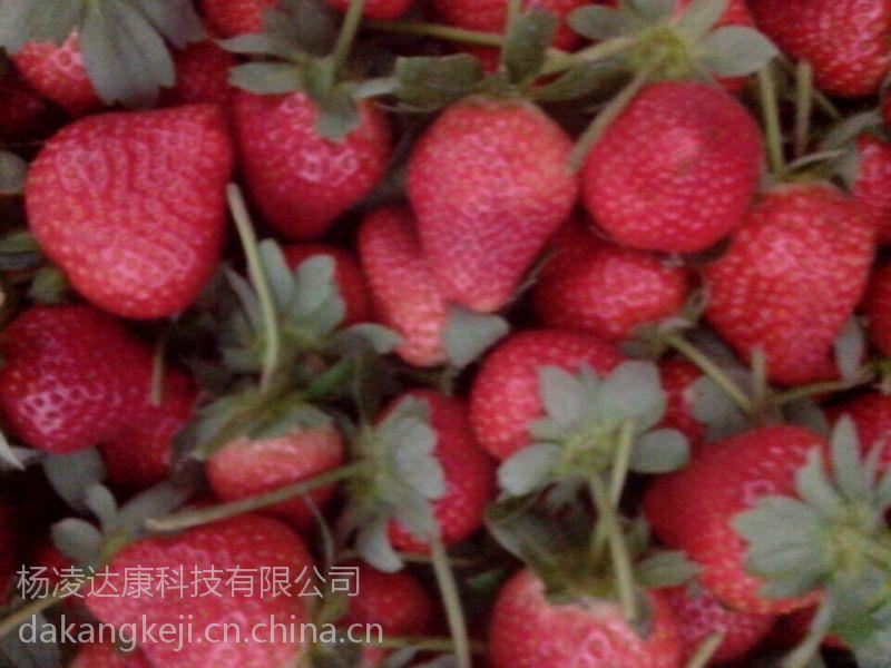 长安奶油草莓