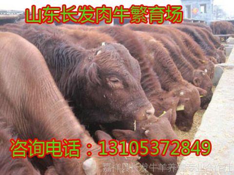重庆市时时彩在线娱乐