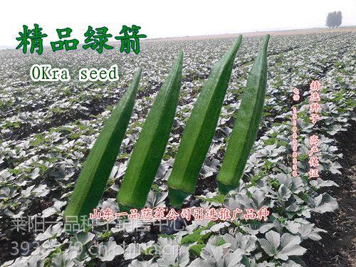 一品蔬菜公司绿箭秋葵浓绿五角品种