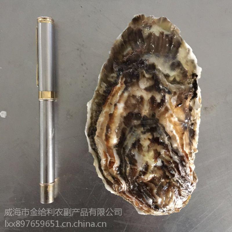 鲜活生蚝供应 广州生蚝贝类货源