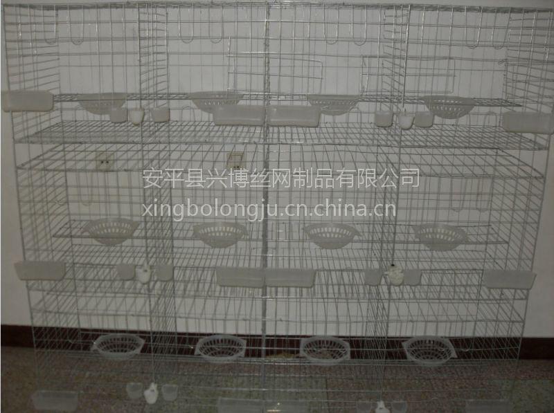 安平兴博直销层联式肉鸽养殖笼具,肉鸽子笼价格
