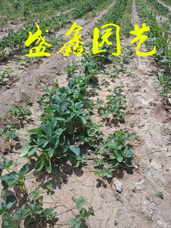 http://himg.china.cn/0/4_1004_1001439_337_450.jpg