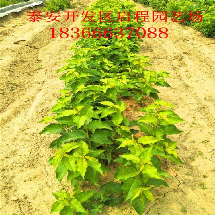 http://himg.china.cn/0/4_1009_236206_750_750.jpg