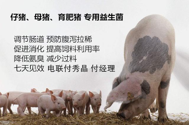 微尔生物健美猪用益生菌多少钱厂家电话