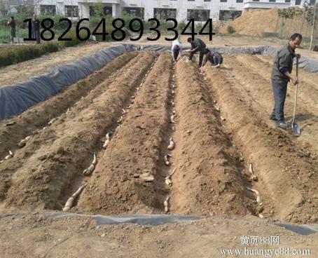 http://himg.china.cn/0/4_1012_237592_454_368.jpg