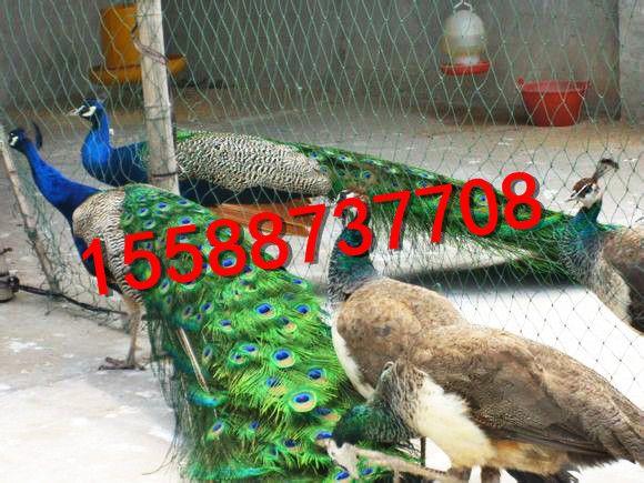 http://himg.china.cn/0/4_1012_238374_580_435.jpg