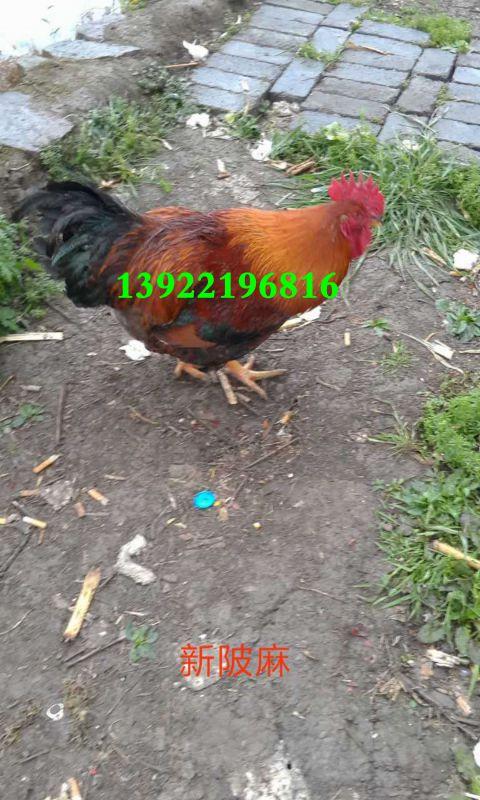http://himg.china.cn/0/4_1013_1020591_480_800.jpg