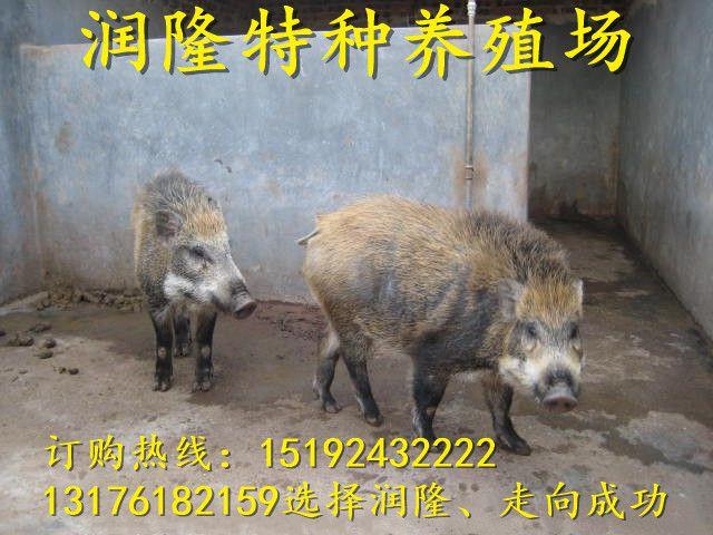 http://himg.china.cn/0/4_1018_234902_640_480.jpg
