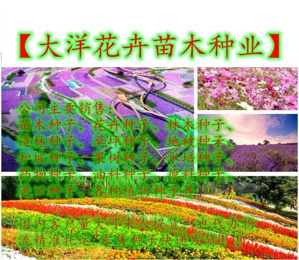 http://himg.china.cn/0/4_1019_1055329_600_522.jpg
