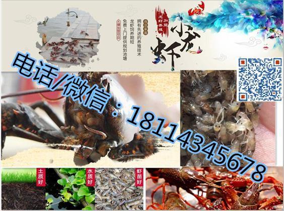 http://himg.china.cn/0/4_1020_235146_564_420.jpg