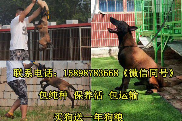 http://himg.china.cn/0/4_1021_243642_600_399.jpg