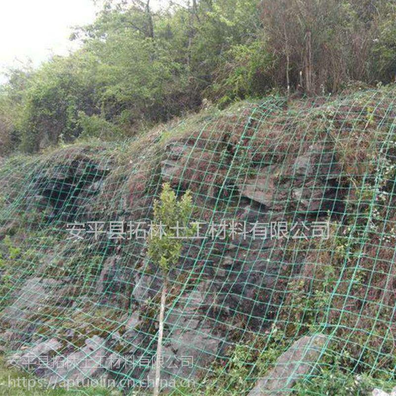绿色钢塑土工格栅 植物护坡绿化土工格栅 爬藤网