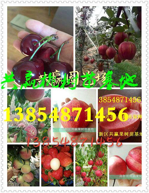 http://himg.china.cn/0/4_107_238238_500_650.jpg