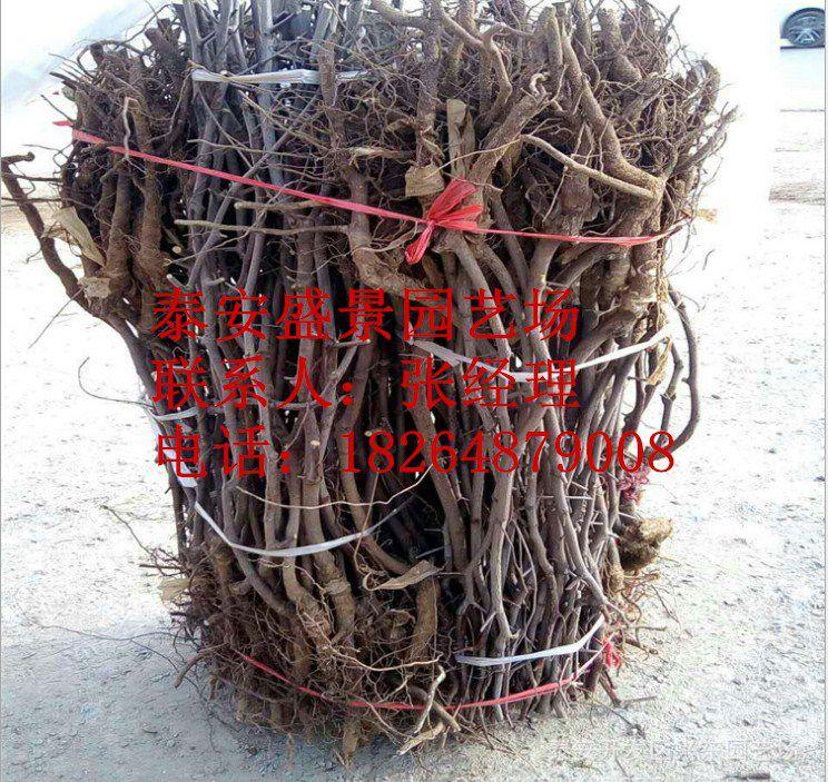 http://himg.china.cn/0/4_109_238022_744_703.jpg