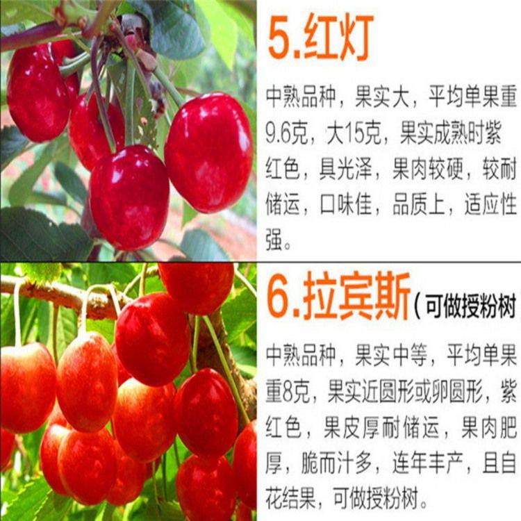 http://himg.china.cn/0/4_117_236694_750_750.jpg