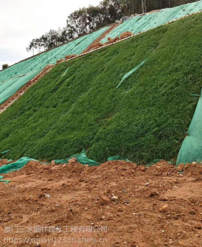 重庆哪里有护坡草种绿化用的草坪种子卖