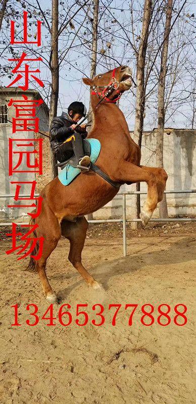 http://himg.china.cn/0/4_119_238686_388_800.jpg