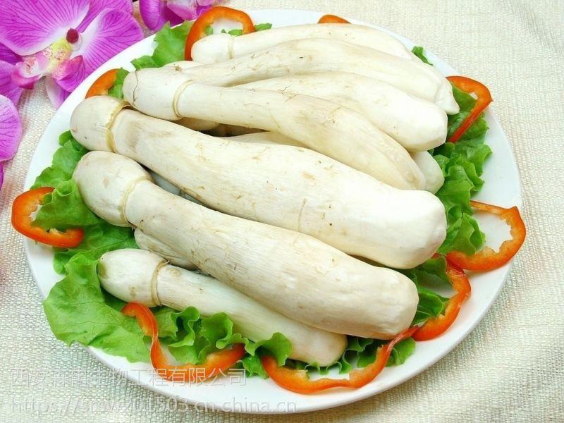 鸡腿菇提取物/毛头鬼伞提取物/鸡腿蘑提取物10:1