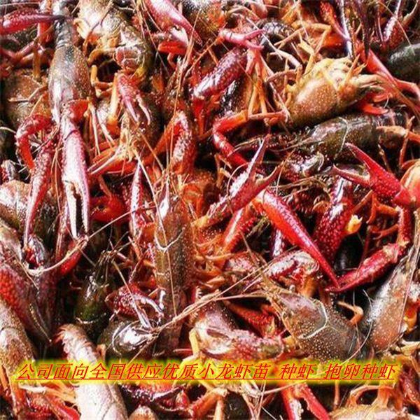 http://himg.china.cn/0/4_126_1050653_600_600.jpg