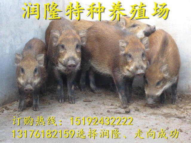 http://himg.china.cn/0/4_126_235912_640_480.jpg