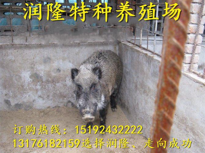 http://himg.china.cn/0/4_133_235400_670_502.jpg