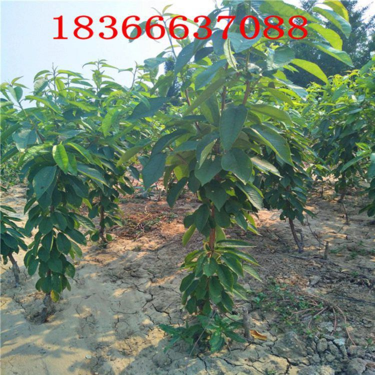 http://himg.china.cn/0/4_140_235788_750_750.jpg