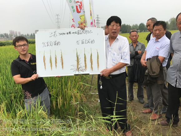 水稻高产套餐比芸乐收高产的 昆仑风水稻高产套餐 厂家价格
