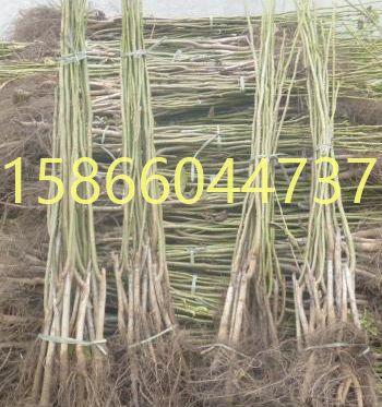 http://himg.china.cn/0/4_146_241950_350_373.jpg