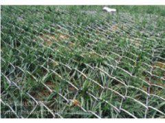 【护坡绿化铁丝网&丹江口护坡绿化铁丝网价格&绿化护坡铁丝网厂家】