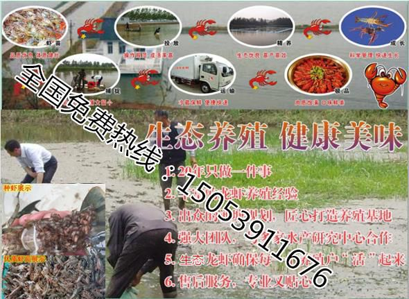 http://himg.china.cn/0/4_14_236764_590_431.jpg