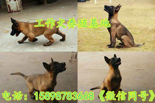 http://himg.china.cn/0/4_151_243944_600_399.jpg