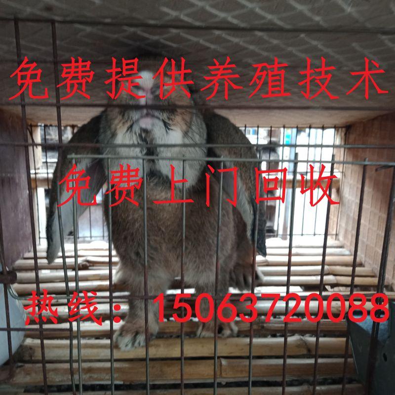 http://himg.china.cn/0/4_153_242256_800_800.jpg