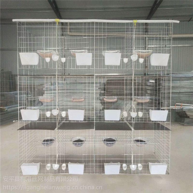 供应广西鸟笼 12位16位鸽子笼 加密肉鸽笼河北利港丝网