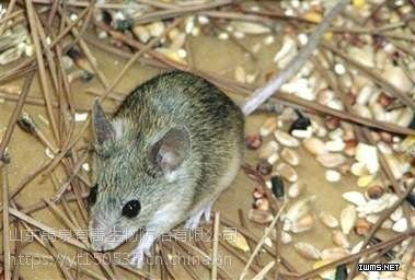 烟台莱山区芝罘区灭老鼠