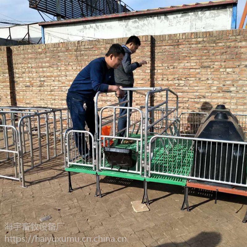 母猪分娩床 猪用双体产床设备母猪保育床 养猪设备