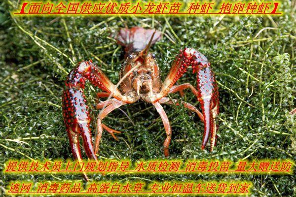 http://himg.china.cn/0/4_183_1050321_600_400.jpg