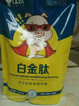 猪吃什么长得快 猪增重妙招 猪怎么养长得快 谊鑫白金肽