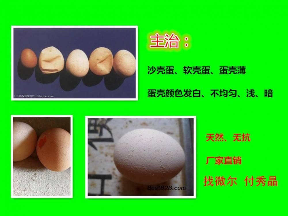 140天的蛋鸡沙壳蛋过多怎么办用蛋鸡微生态