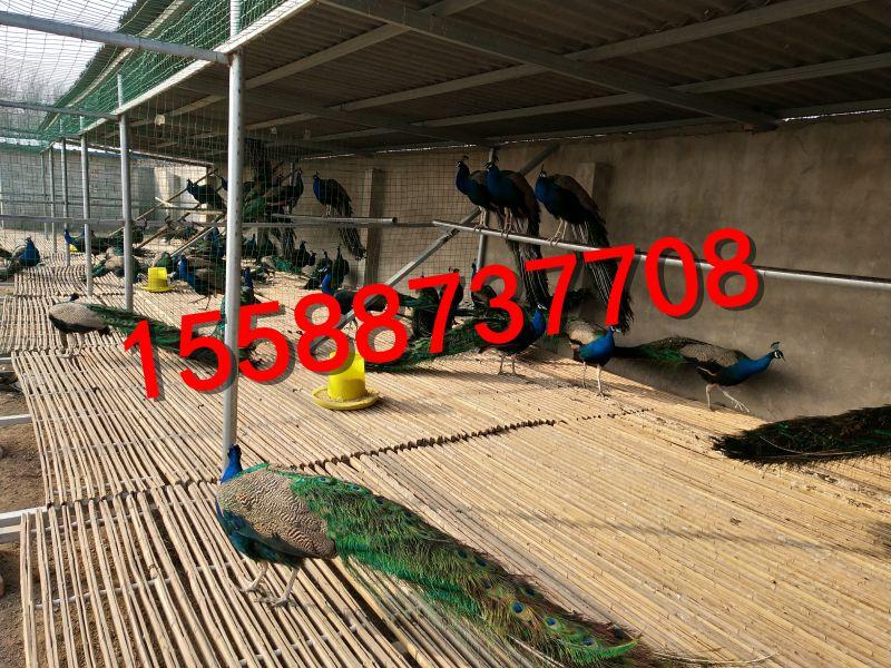 http://himg.china.cn/0/4_199_238648_800_600.jpg