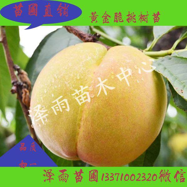 http://himg.china.cn/0/4_214_237424_600_600.jpg
