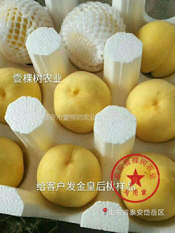 特晚熟黄肉鲜食桃 1公分黄金蜜4号黄桃苗预定中
