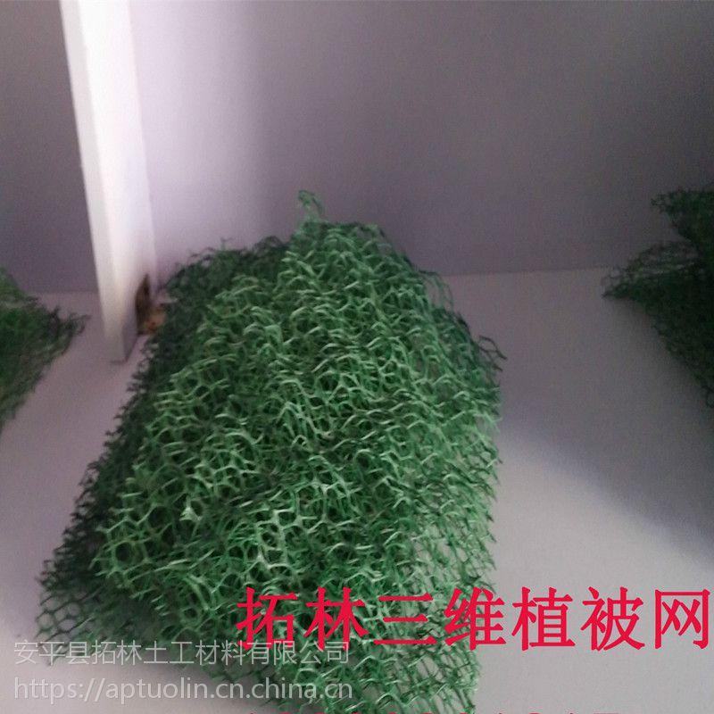 护坡固土三维网 三维植被网护坡 绿化种草三维网