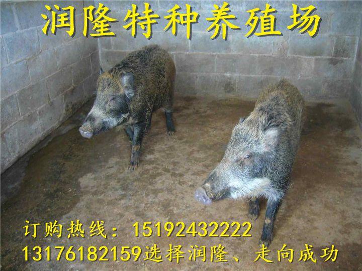 http://himg.china.cn/0/4_221_235046_720_540.jpg