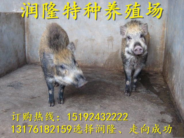 http://himg.china.cn/0/4_225_234112_640_480.jpg