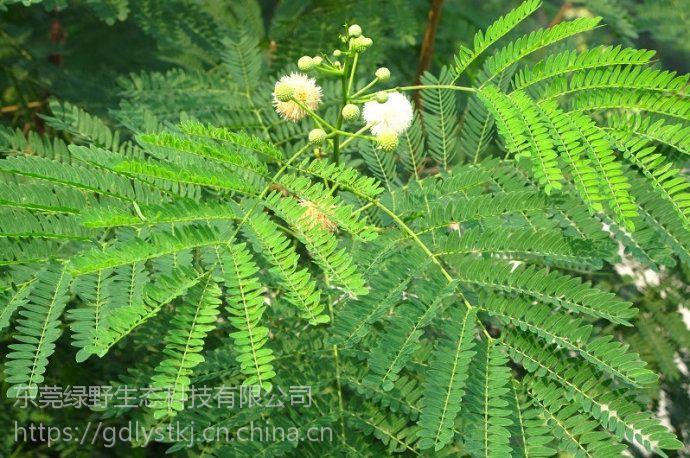 绿野生态专业.护坡草种,绿化草种,草花种子,草坪草籽,草花种子批发销售
