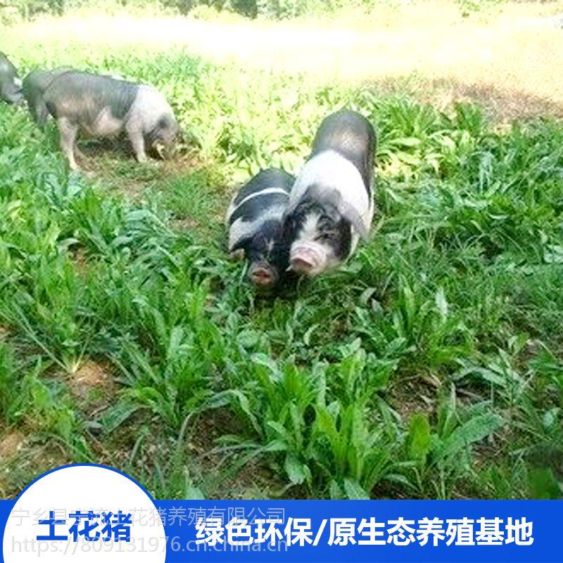 流沙河宁乡土花猪生态养殖宁乡土花猪野生散养养殖场直销