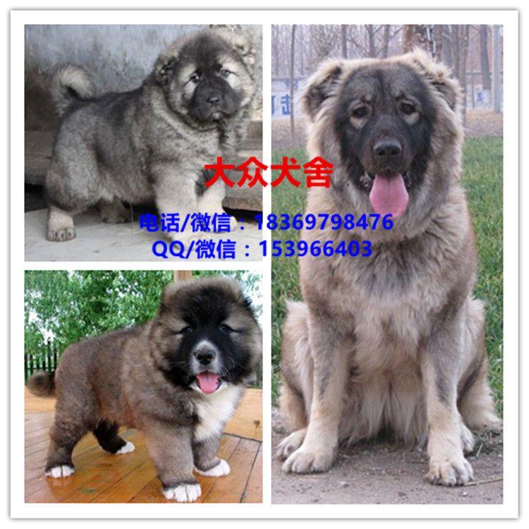 http://himg.china.cn/0/4_242_242384_750_750.jpg