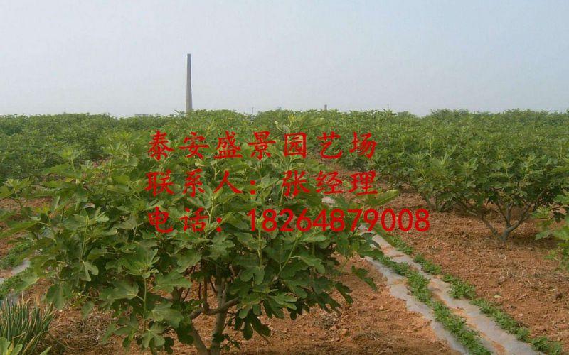http://himg.china.cn/0/4_244_1033463_800_500.jpg