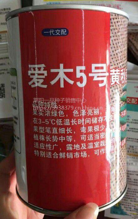 爱木五号秋葵种子耐低温性强