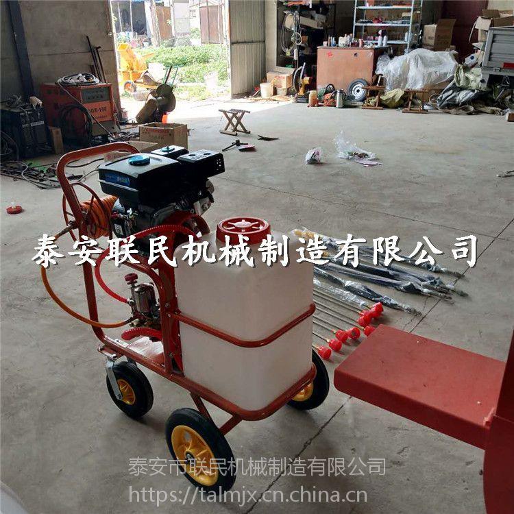 泰安联民供应 果园作物喷药机 汽油手推式打药机 一件代发